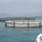 aquapod netpen 150x150 - Aquapod Net Pen, A New Breed of Culture Container in Mariculture