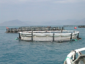 Aquapod Net Pen, A New Breed of Culture Container in Mariculture