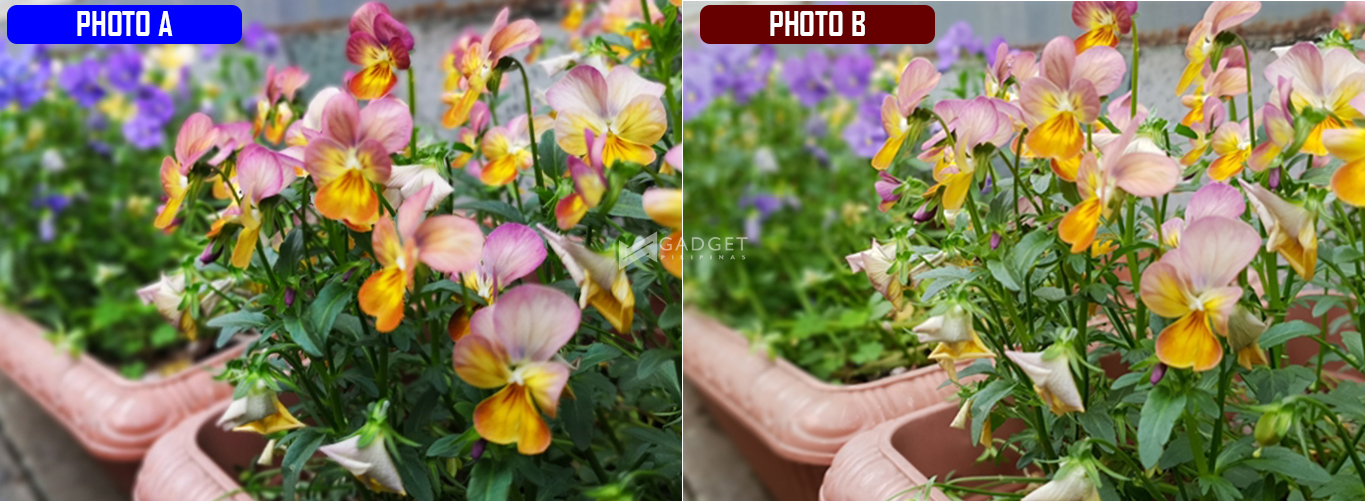 Flowers and Bokeh S H - Huawei P20 Pro or Samsung Galaxy S9: Find out which phone's the right one for you by taking this quiz!